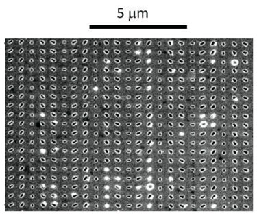 SEM image of the metasurface