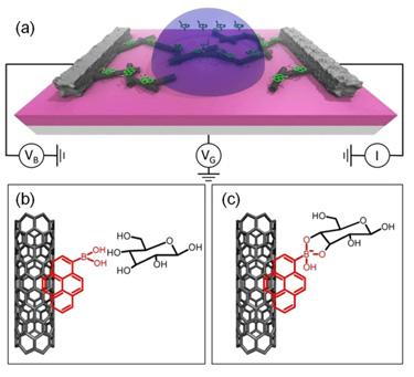 Glucose binding chemistry