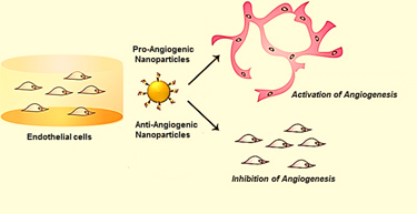 How nanoparticles can activate or inhibit angiogenesis