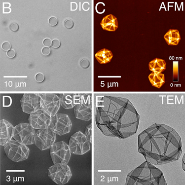 Microscopy images of Fe(III)-tannic acid capsules