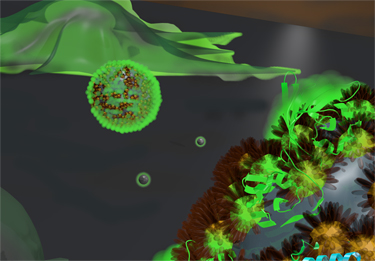 Delivery to the cytosol