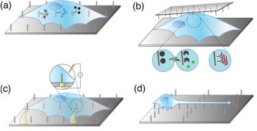 Nanostructure arrays are generally designed along four lines of potential applications: molecule delivery (a), cell diagnostics (b), electrophysiology (c), and cell guidance (d)