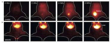 Mouse rapidly excretes NIR-II dye