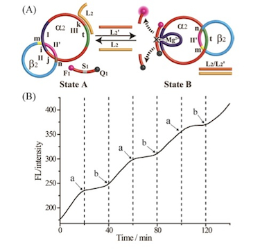 Switchable catalytic DNA catenane