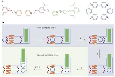 How the molecular pump works