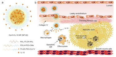 Reducing inflammation in atherosclerotic plaques