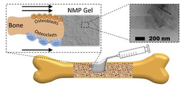Speeding up bone repair