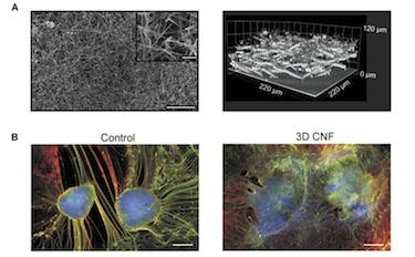 3D carbon nanotube framework scaffolds redirect neurite outgrowth