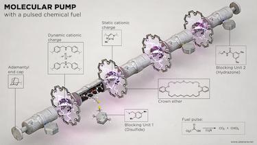 Chemically-fuelled molecular motor