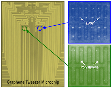 Microchip containing a large array of graphene electronic tweezers