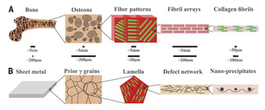 Microstructure of new steel compared with those of bone and other steels