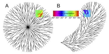 Spherulites can be either spherical or plumose