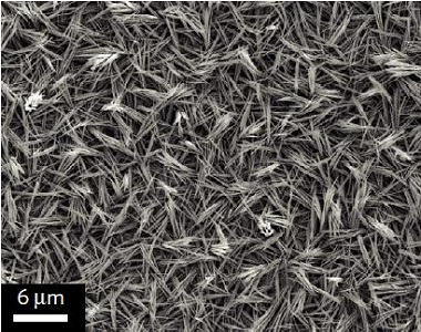 Scanning electron micrograph of as-prepared CuO nanowires