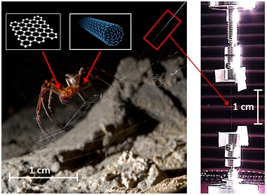 A schematic of the process. Nanomaterial-containing water dispersions in a spider's environment can be incorporated into its silk. Tensile testing of the silk demonstrates its enhanced mechanical properties.