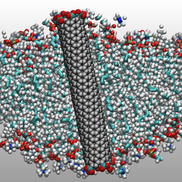 Carbon-nanotube porin embedded in a lipid membrane