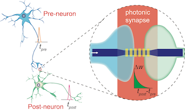 A photonic synapse mimicking the biological synapse
