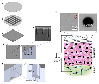 Diagrams showing the construction of the transfection device, a scanning electron microscope image of the cross section of the channels, and a diagram showing scanning electron microscope images of the nanochannels juxtaposed with an illustration of the operation of the device.