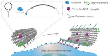 DNA nanobot 'starves' tumors