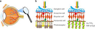 Retina–nanowire interfaces