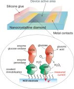 Diamonds could be a biosensor's best friend: schematic showing the design of an enzyme-modified nanocrystalline diamond electrode