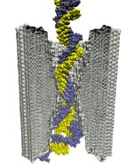 Stretched by an applied electric field, a DNA helix squeezes through a 2-nm-diameter pore in a silicon nitride membrane.