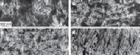 SEM images of the composites reveal different morphologies of the graphene sheets, including their packing, at different concentrations (vol.%)