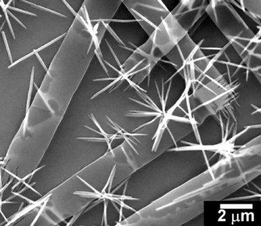 SEM image of iron oxide nanobelts and nanowires