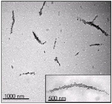 Biotinylated-single-walled carbon nanotubes