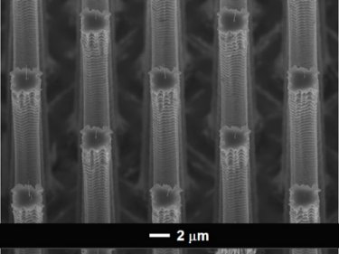 Array of nanotube-tipped silicon columns