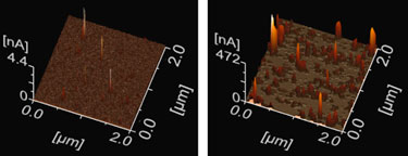 Conductive AFM images: local current flow