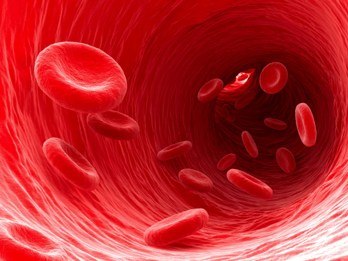 ... impression of red blood cells flowing through a blood vessel