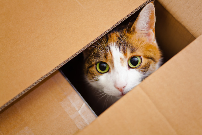 How fat is Schrödinger's cat? - physicsworld.com