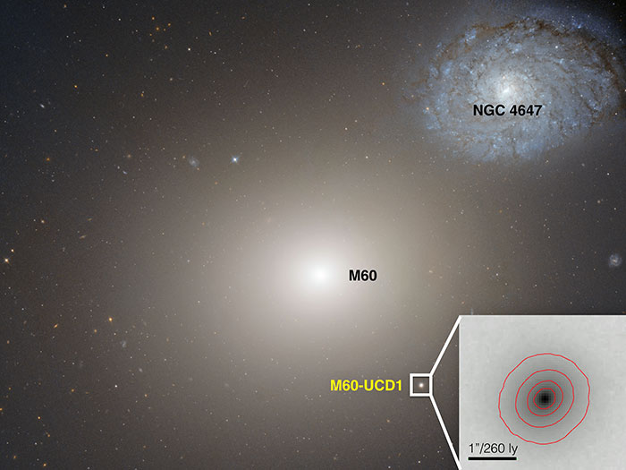 This Hubble Space telescope image shows the gargantuan galaxy M60 in the centre, and the ultra-compact dwarf galaxy M60-UCD1 below it and to the right, and also enlarged as an inset. M60's gravity also is pulling galaxy NGC4647, upper right, and the two eventually will collide. (Courtesy: NASA/Space Telescope Science Institute/European Space Agency)