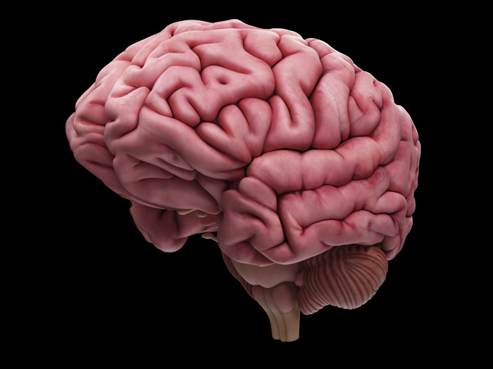 Foetal folds: a fully formed human brain
