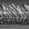 Graded-index nanorods