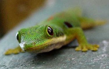 Gecko biomimetics