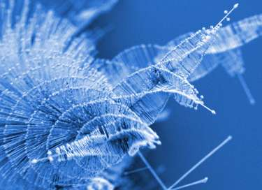 Nanowire pine trees