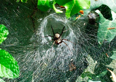 Spider silk is weakly connected but fails gracefully