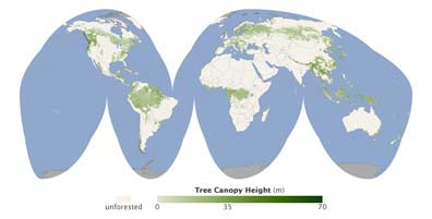A first-of-its-kind global map shows forest canopy height