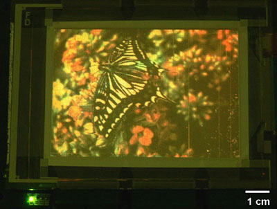 Photo of the quantum dot display with an image of a butterfly