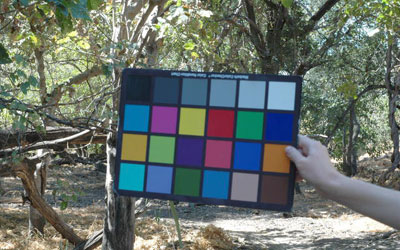 Colour chart to aid visual researchers. Courtesy: Lucia Seyfarth/University of Pennsylvania