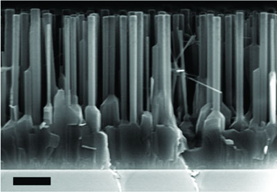 A scanning-electron-microscope image showing the zinc-oxide thin film and nanowires