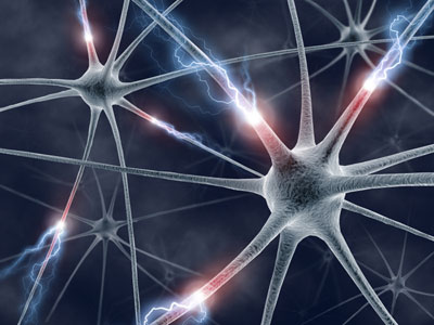 Neurons transferring information
